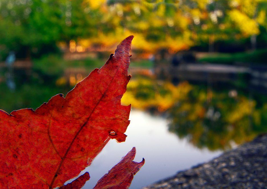 Early Autumn colors by granagringa