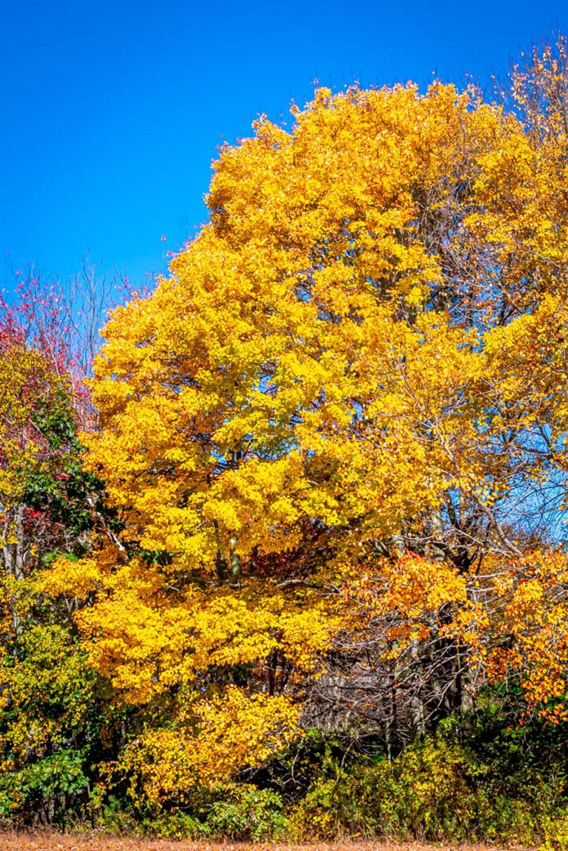 Beautiful in Sunshine too by joansmor