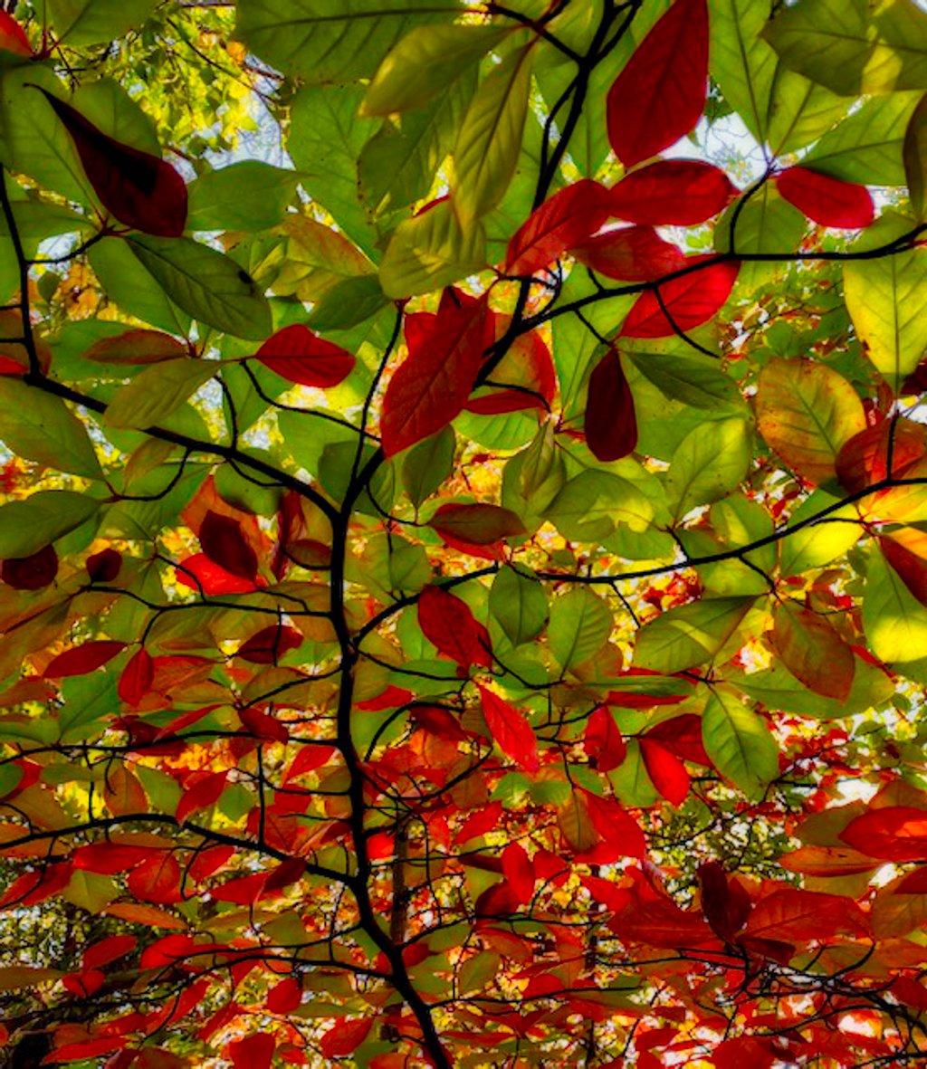 Tree leaves  by joysfocus
