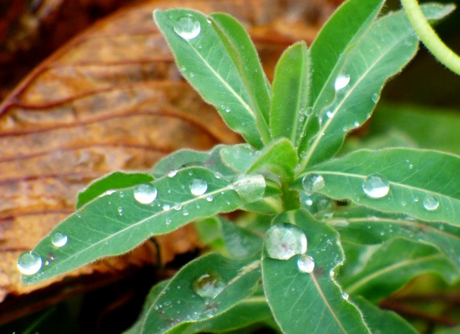 Raindrops by fishers