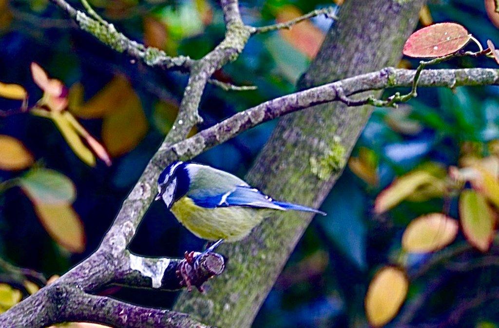 Flitting Bird by carole_sandford