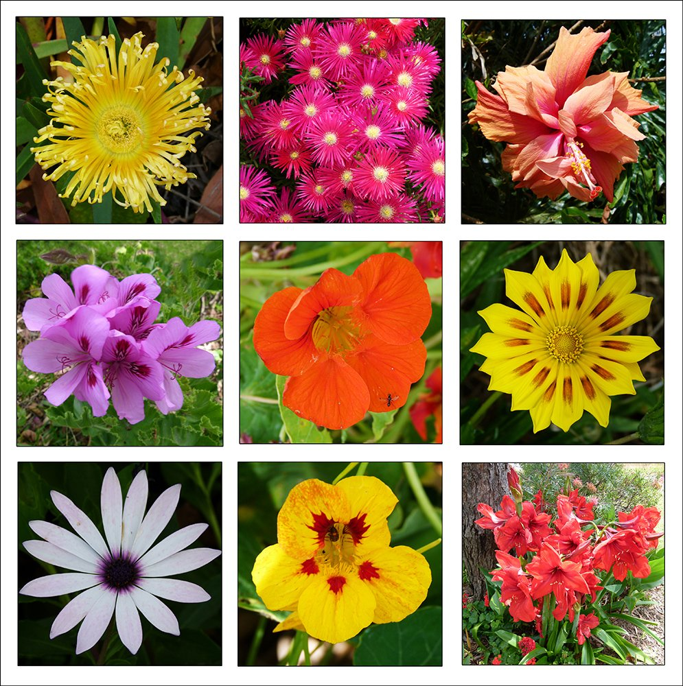 Flower Collage by onewing