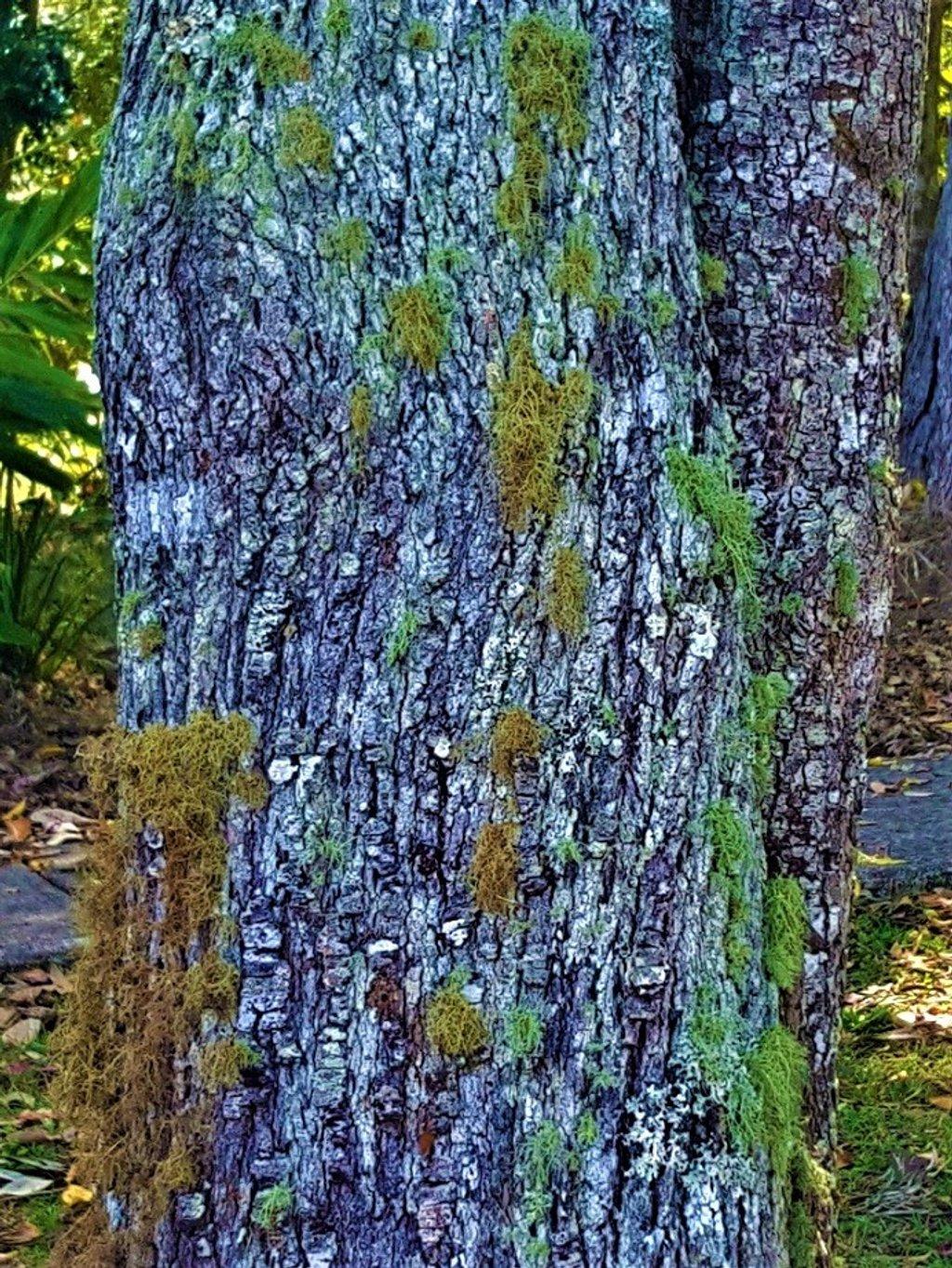 Colourful Lacey Lichen ~       by happysnaps