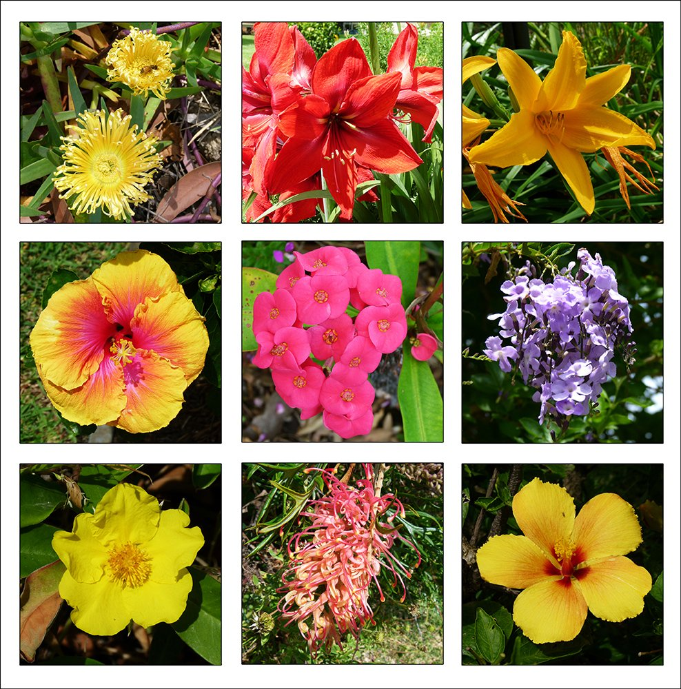 Flower Collage 2 by onewing