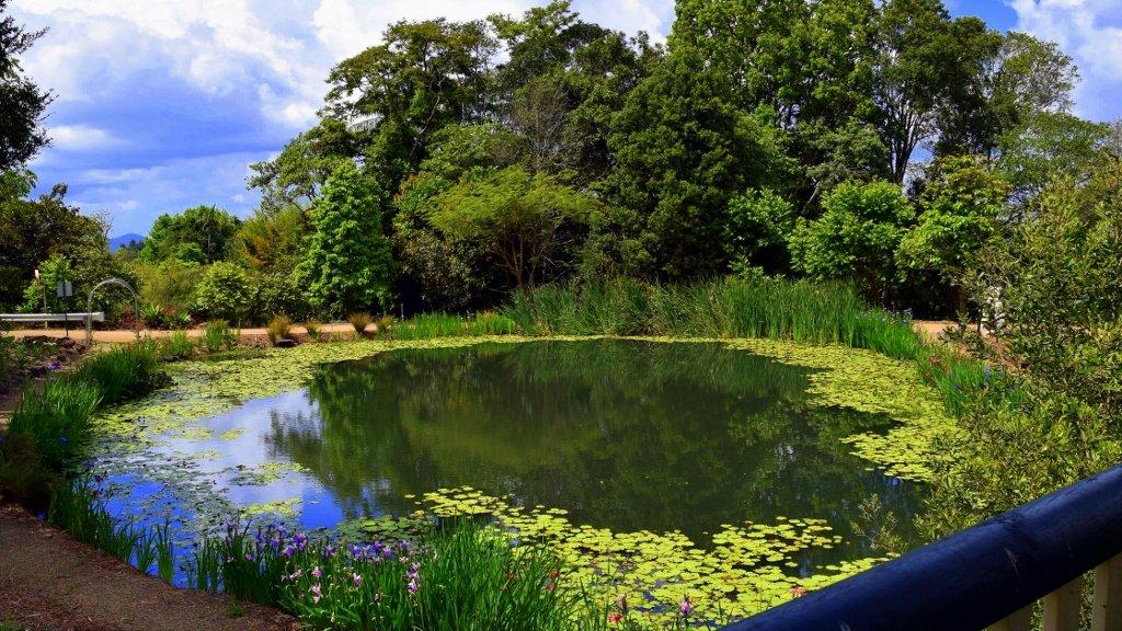 Reflection Pond at Botanic Gardens ~     by happysnaps