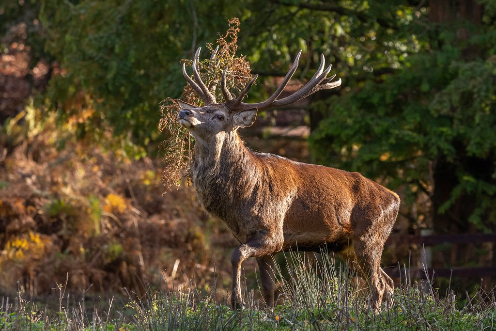 King of the Hill  by rjb71