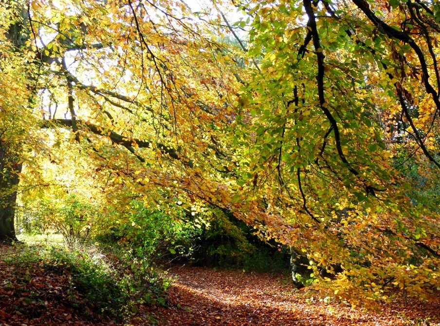 Autumn Colour by fishers