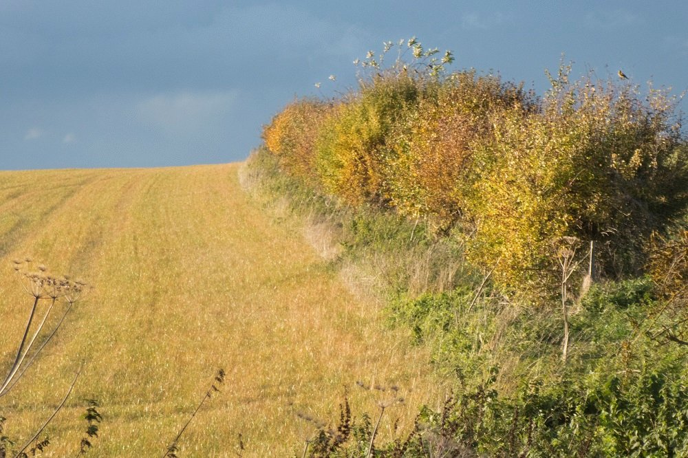 Autumn hedgerows by helenhall