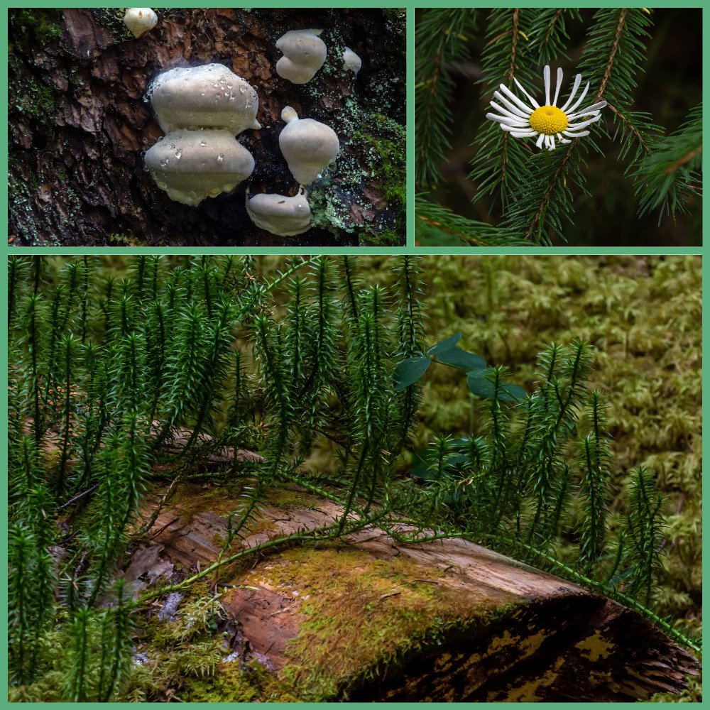 The Rich BC Forest by farmreporter