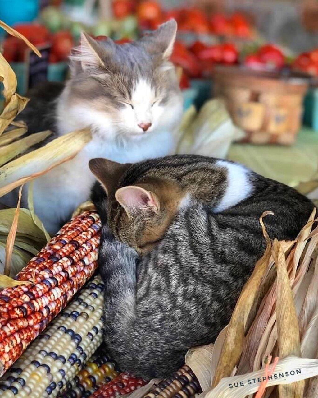Farmer's Market Cuddlers by Swazzette