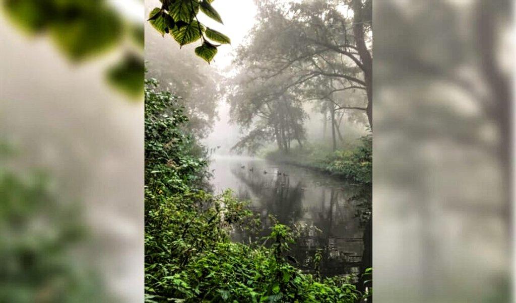 Fog by tstb13