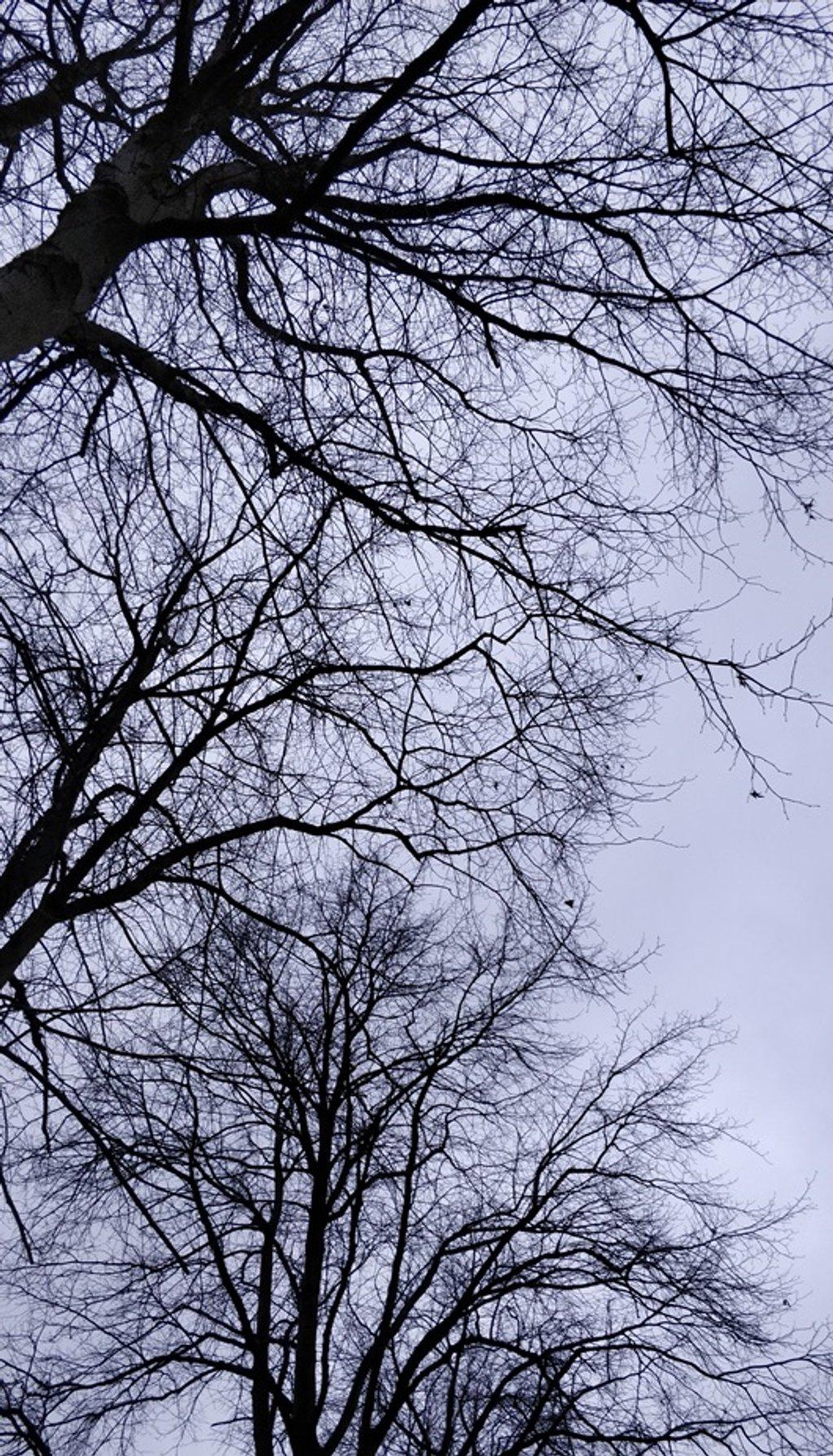 November sky by roachling