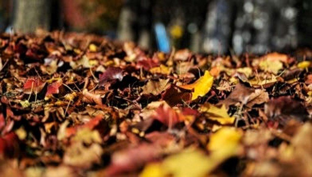 Autumn by tstb13