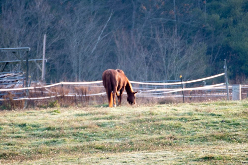 Another horse spotted on my way to work by joansmor