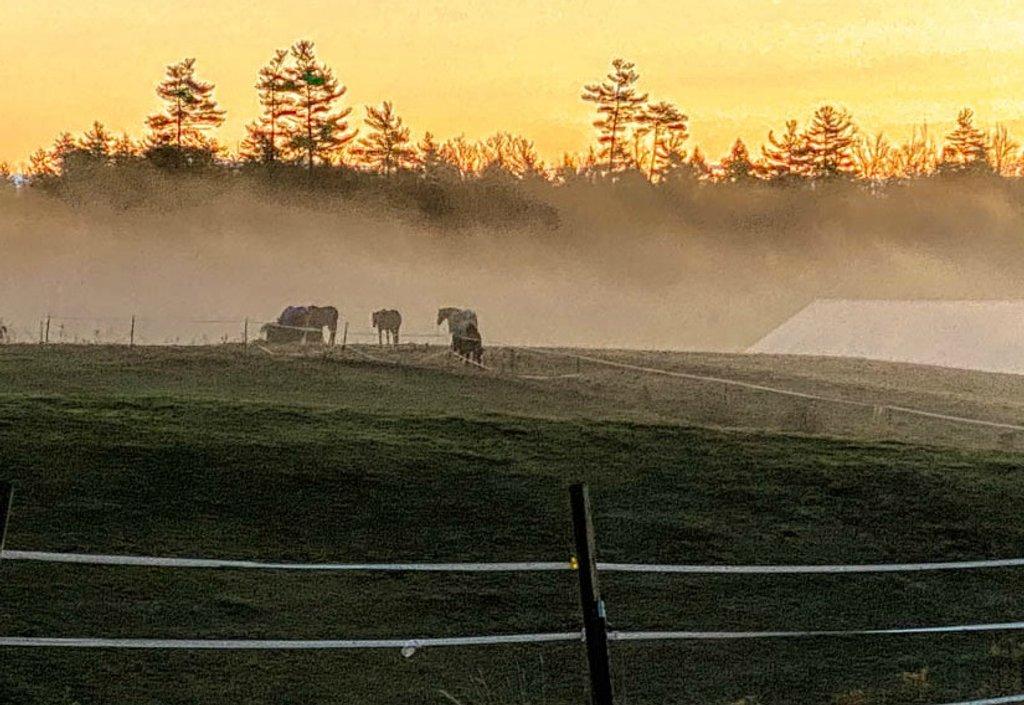 Horses in the mist by joansmor
