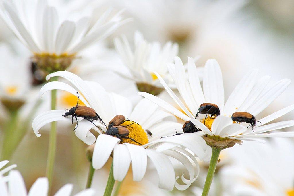 The Bug Brigade by kgolab