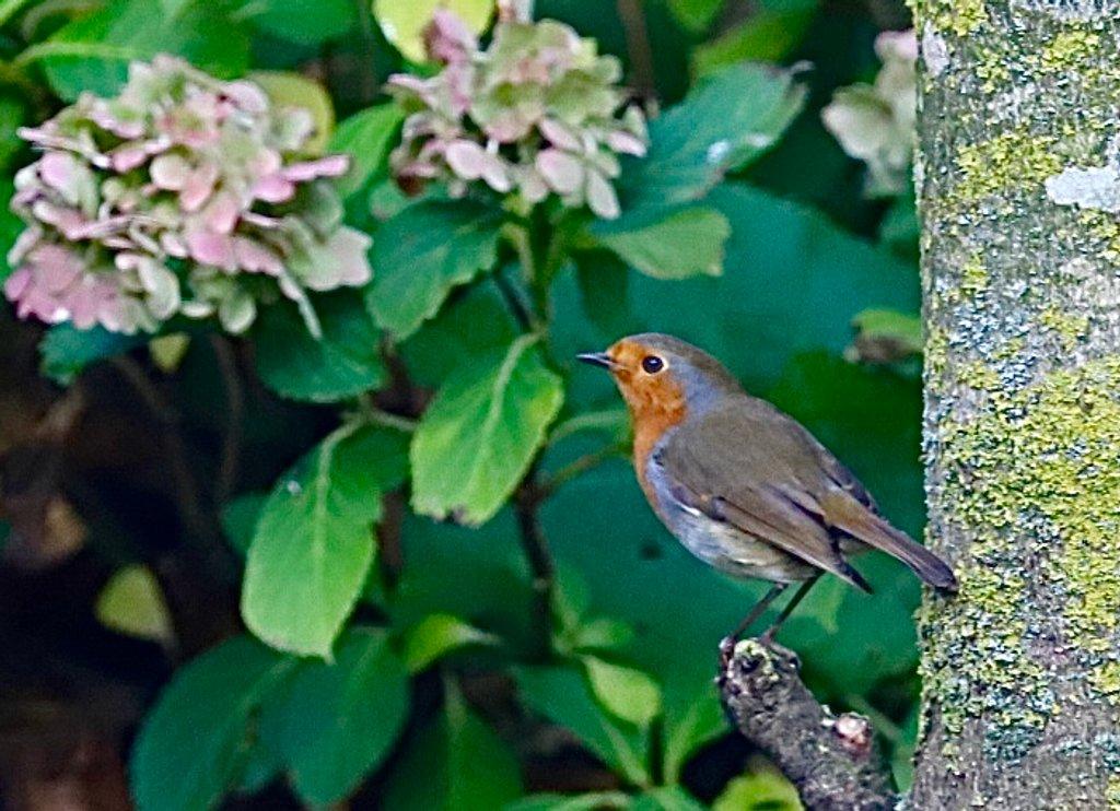 Robin by carole_sandford