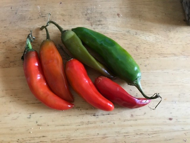 """Hot"" Peppers by allie912"