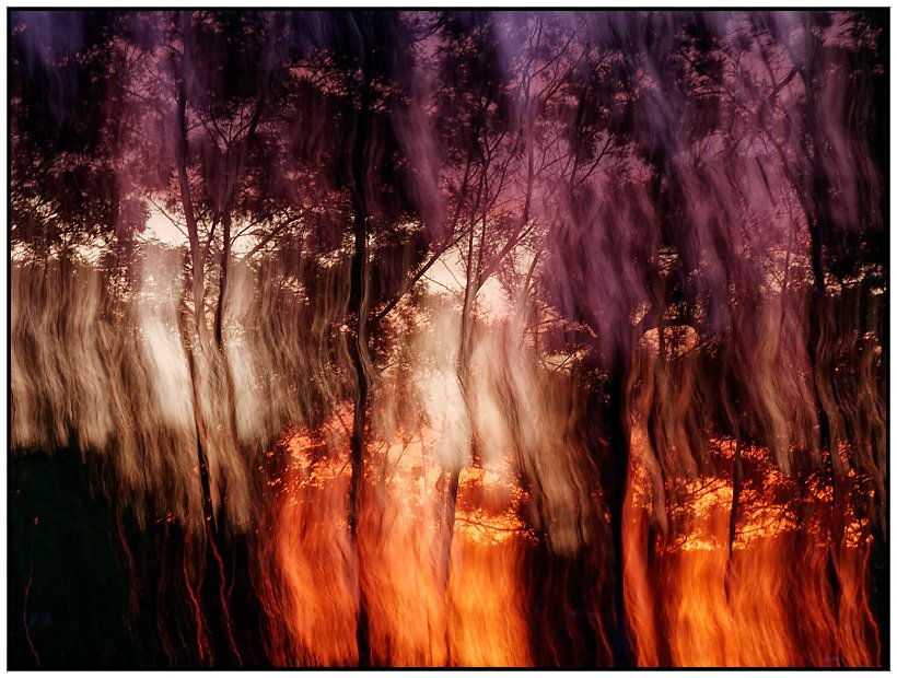 Trees on Fire by chikadnz