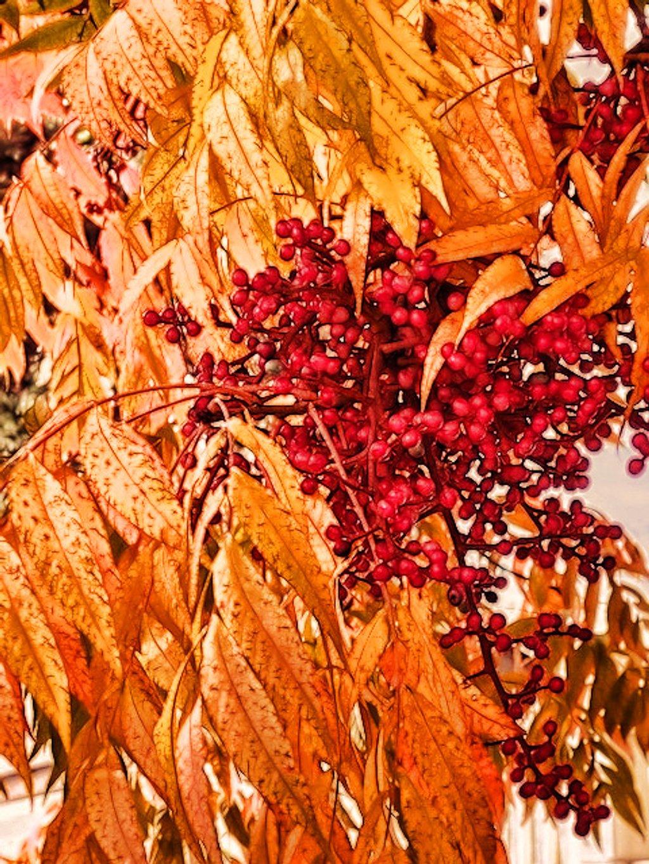 Autumn by joysfocus