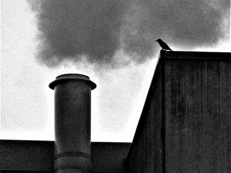 Bird and Steam by granagringa