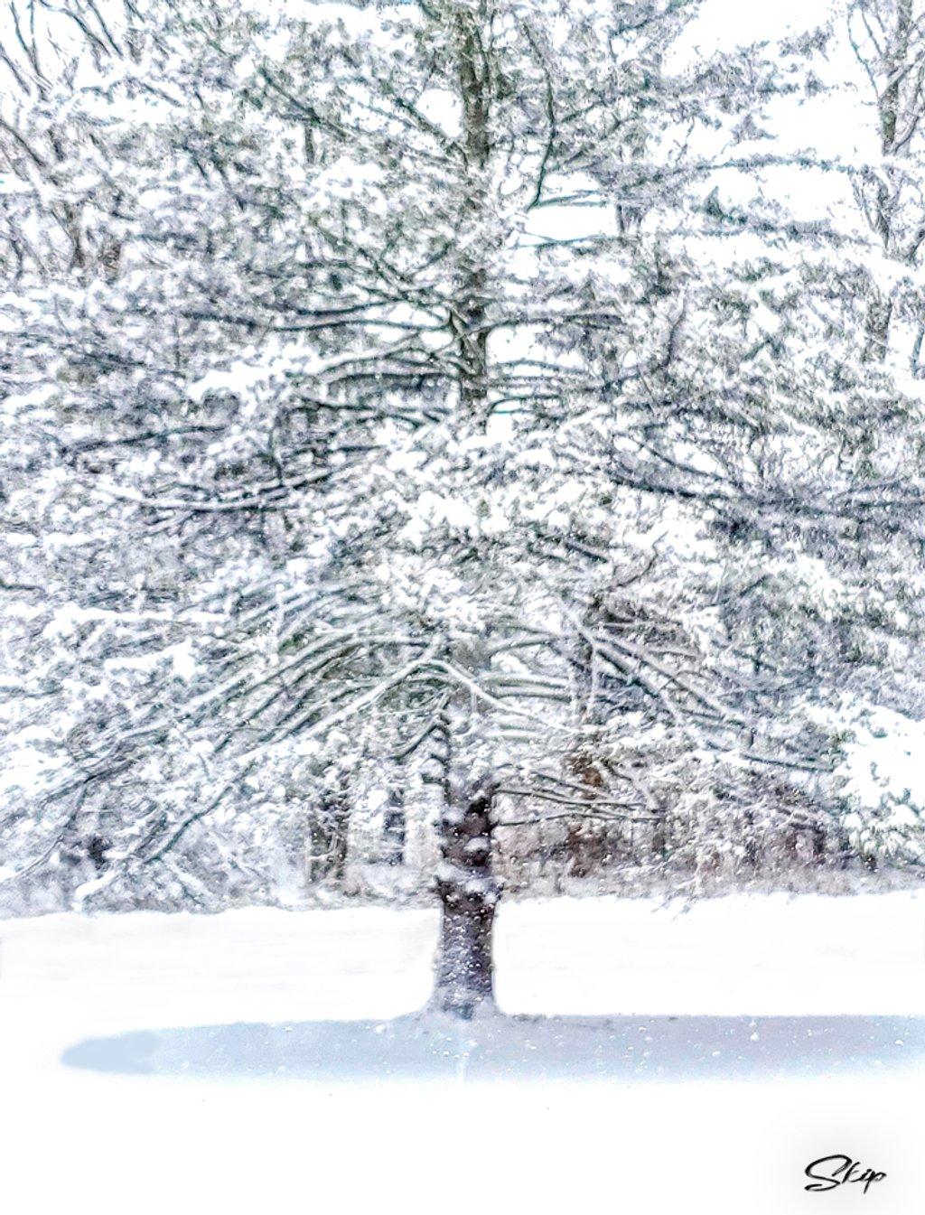 Let It Snow, Let It Snow, Let It Snow  by skipt07