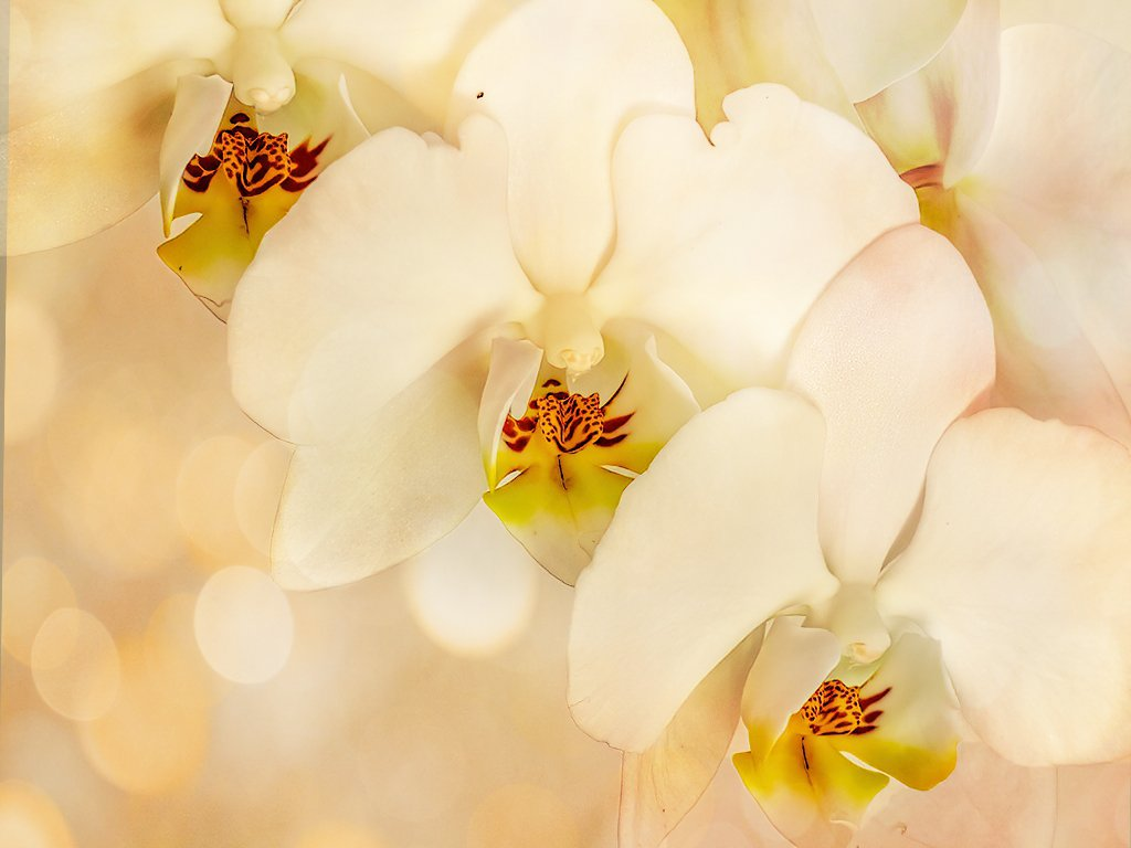 My Orchids have grown by ludwigsdiana