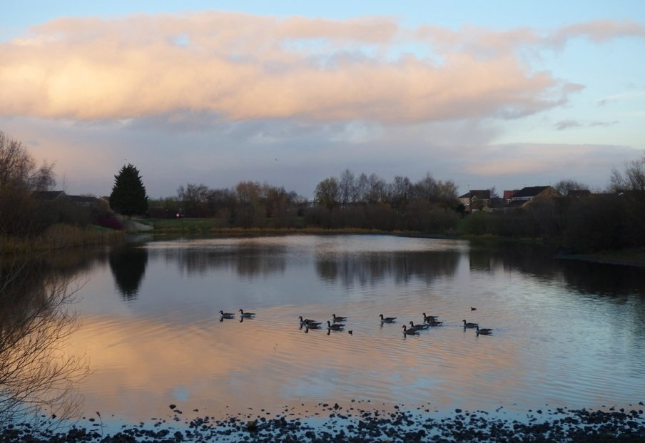 Late Afternoon beside Rawcliffe Lake by fishers