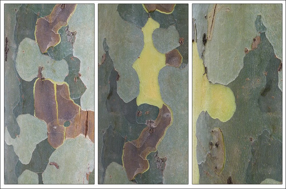 Plane Tree Bark Triptych by onewing
