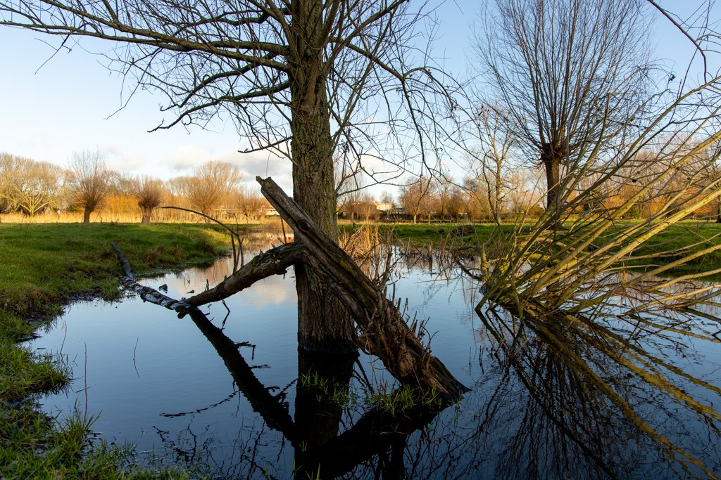 Tree in water by leonbuys83