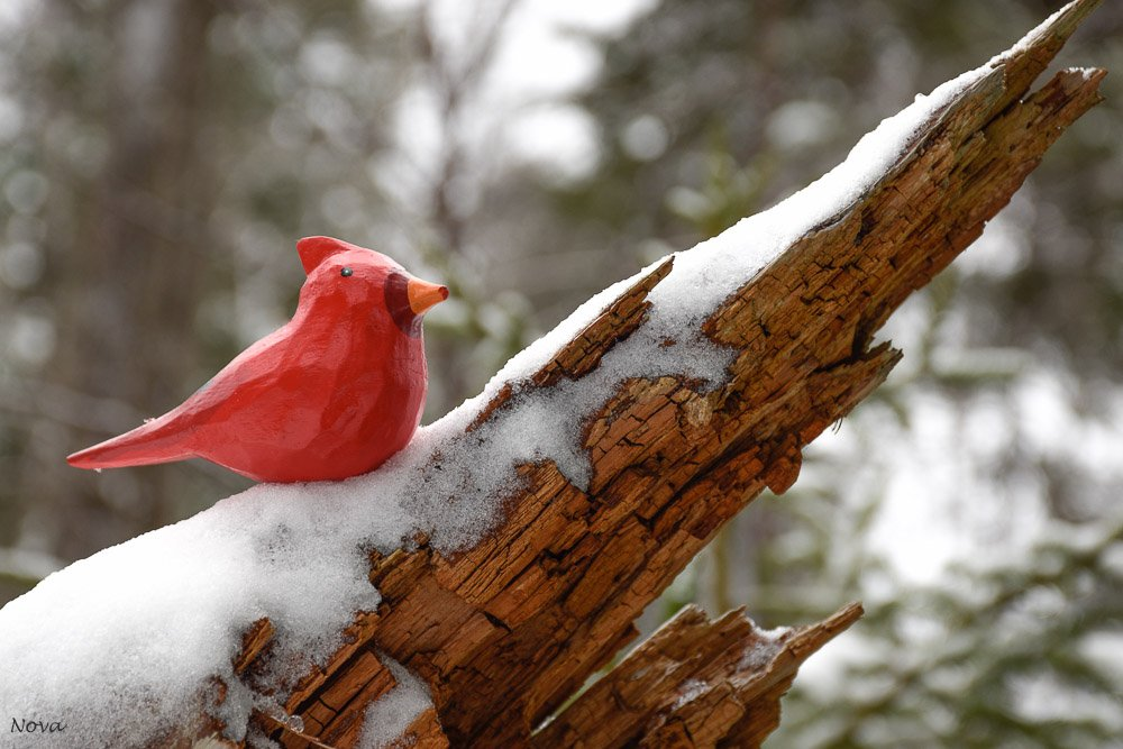 The cardinal by novab