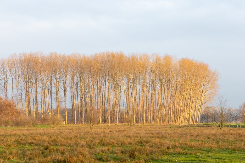 Golden Trees by leonbuys83