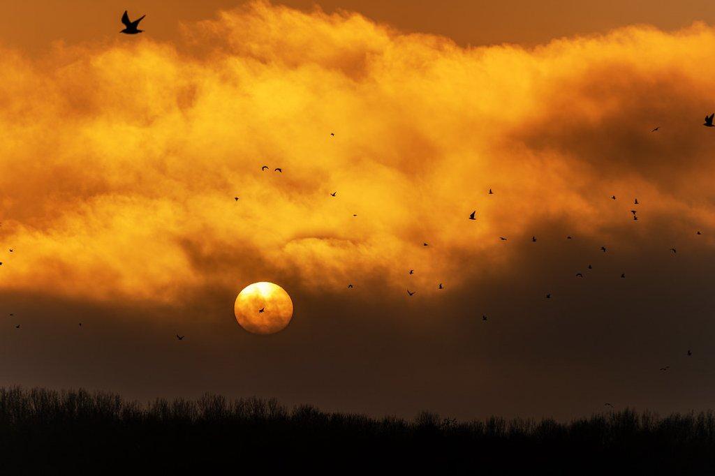 The Fog by rjb71
