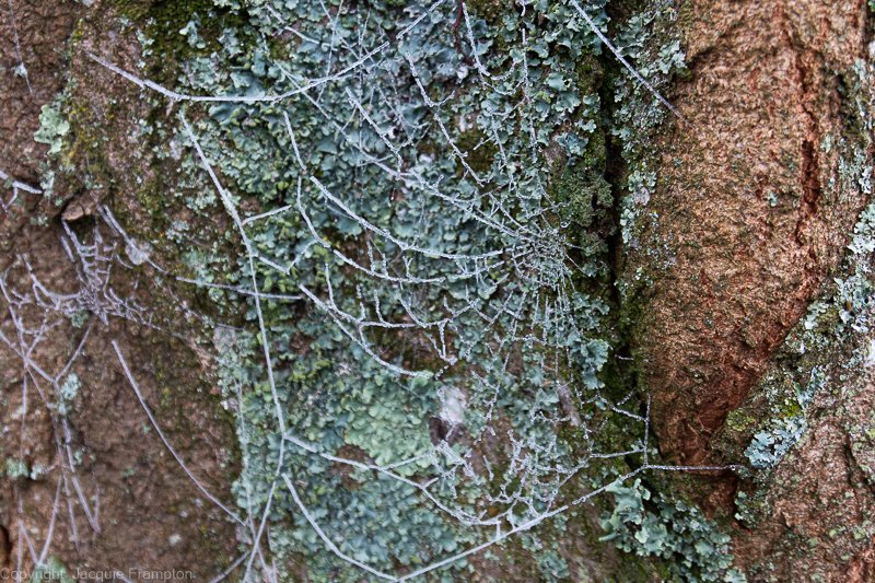 Web of Frost by jqf