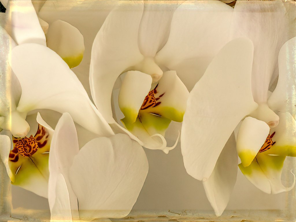 Another Orchid by ludwigsdiana