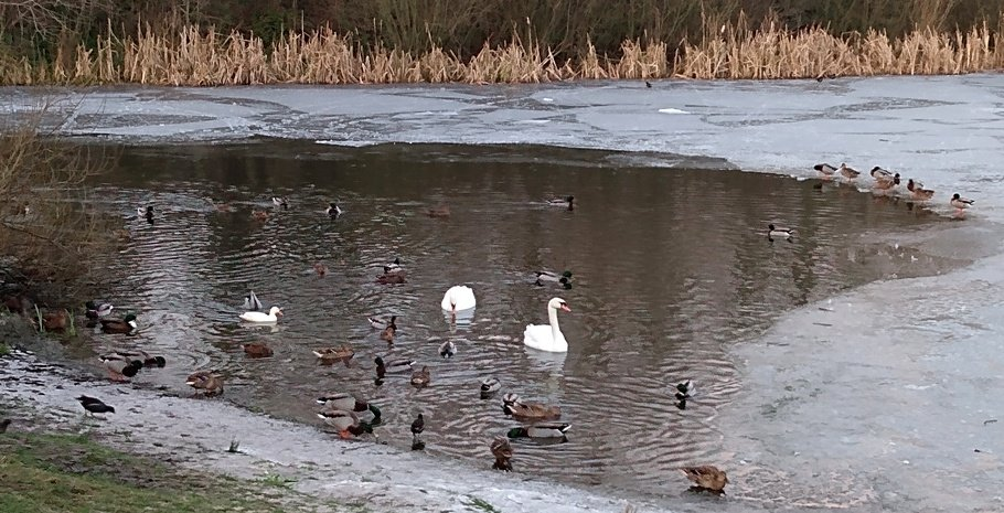 Birds on the Lake by fishers