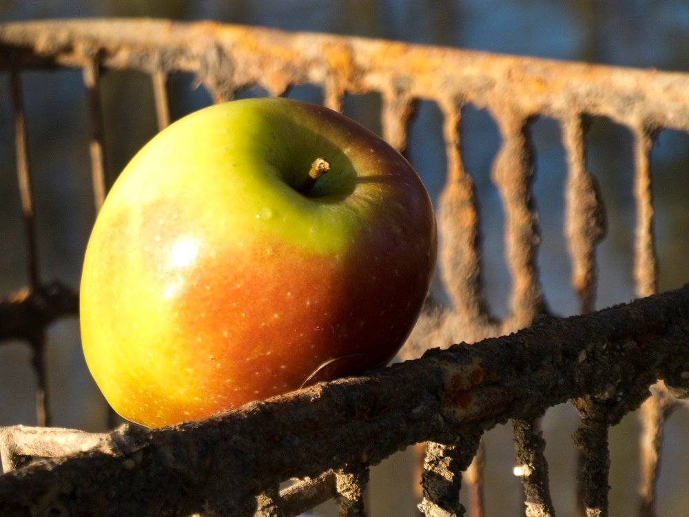 The apple and the shopping trolley by helenhall