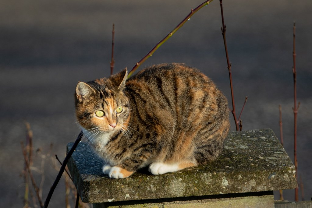 Cat on the fence by leonbuys83