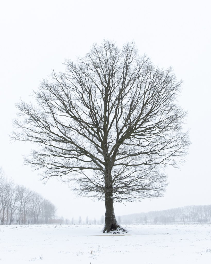 The Tree in snow by leonbuys83