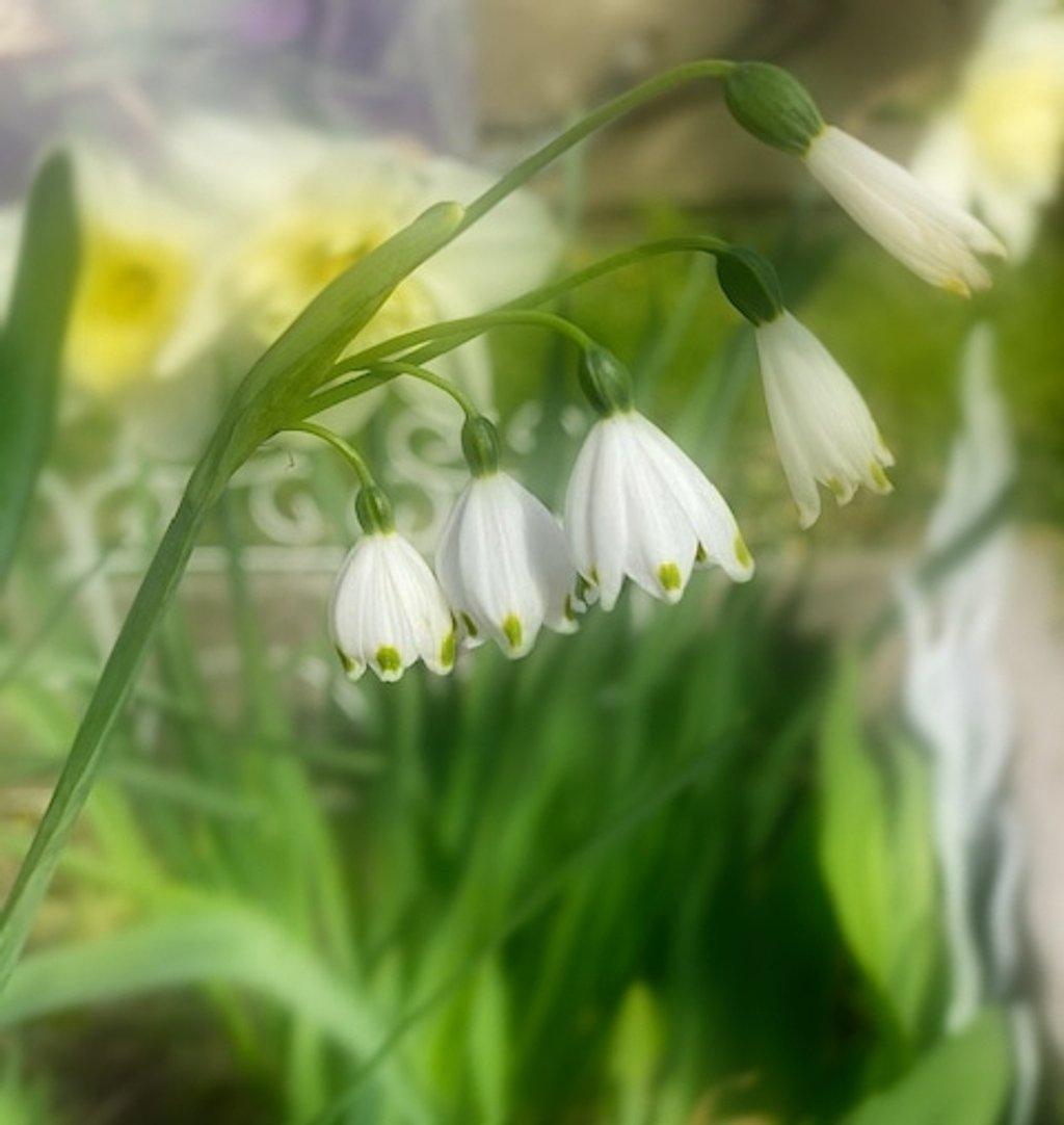 Tiny Flowers by joysfocus