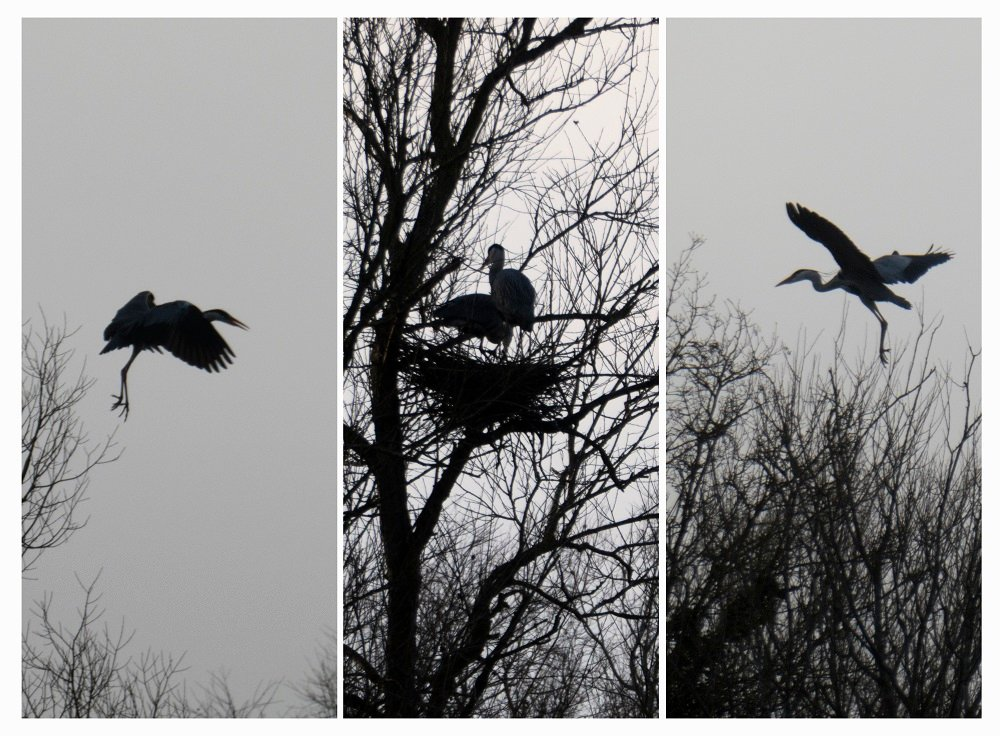 time to roost by helenhall