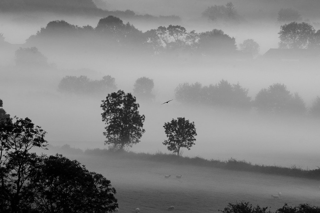 The Fog is Clearing  by rjb71