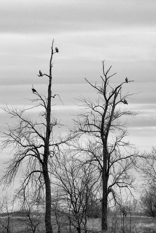 Where Eagles Dare by lsquared