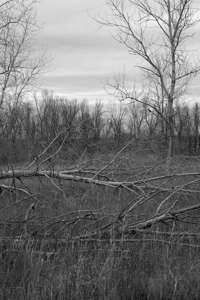 Downed Trees by lsquared