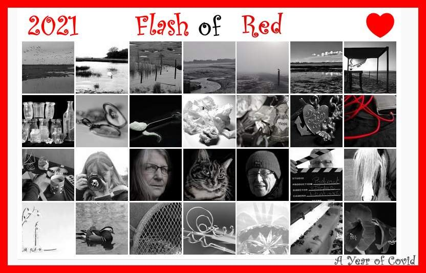 Flash of Red by 30pics4jackiesdiamond