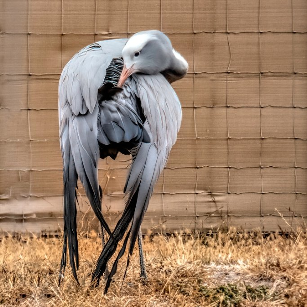 Blue Crane  by ludwigsdiana