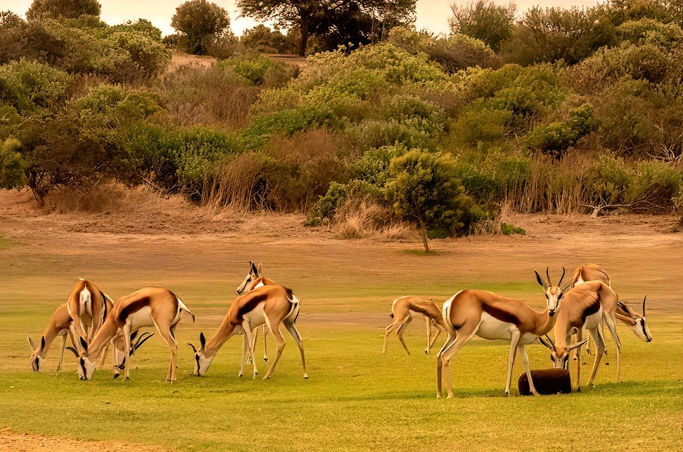 The Springbuck did not mind the smoke by ludwigsdiana