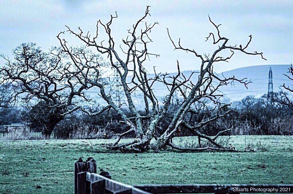 Skeleton tree by stuart46
