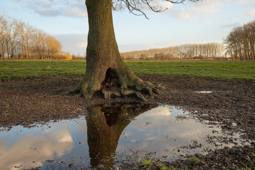 The tree and its reflection by leonbuys83