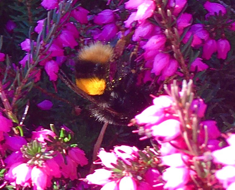 First Bumblebee... by moominmomma